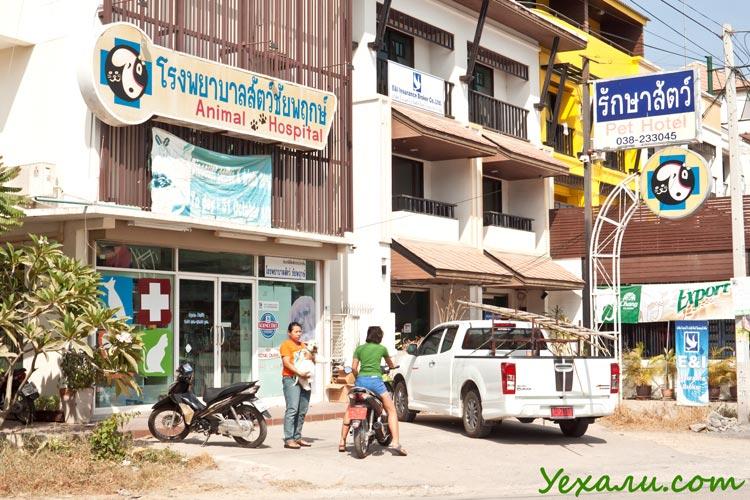 Гостиница для кошек и собак в Паттайе на Джомтьене, а также ветеринарная клиника