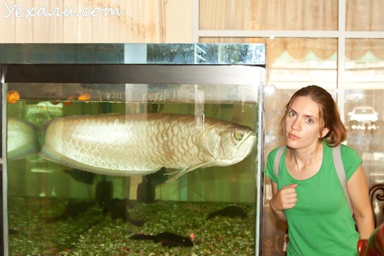 Laos Vientiane hotel fish