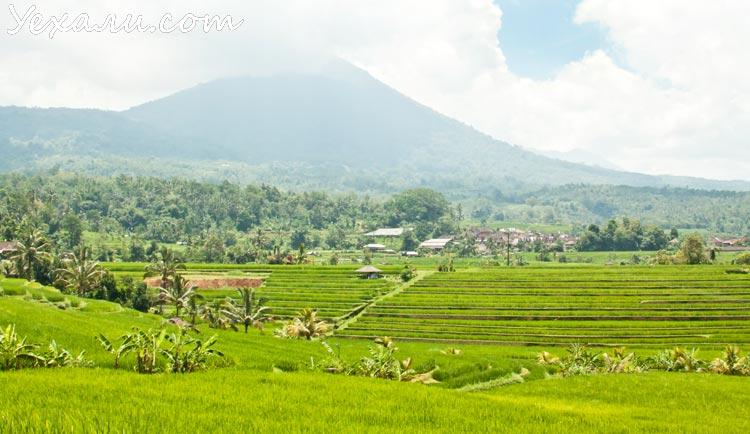 Jatiluwih Rice terraces_750