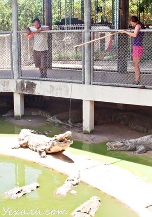 Цены в Паттайе: сад камней и крокодиловая ферма