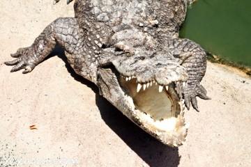 Цены в Паттайе на еду для крокодила