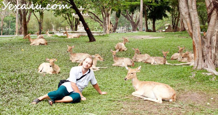 Отдых в Паттайе, зоопарк Као Кео