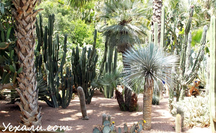 Сад Мажорель, Марракеш, Марокко