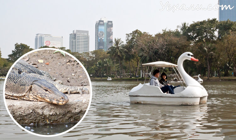 Экскурсия из Паттайи в Бангкок: парк Люмпини