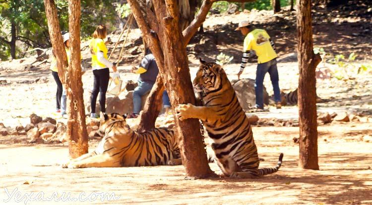 Тигровый храм в Тайланде