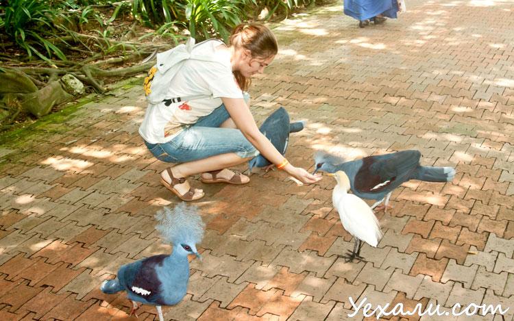 Куала-Лумпур самостоятельно: парк птиц