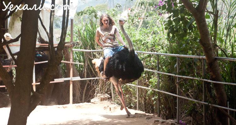 Развлечения во Вьетнаме для молодежи: катание на страусе