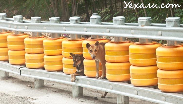 Бездомные собаки в Тайланде