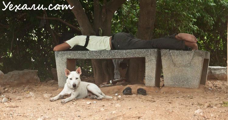 Бродячие собаки в Таиланде