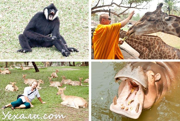 Самые интересные экскурсии в Паттайе: Као Кео