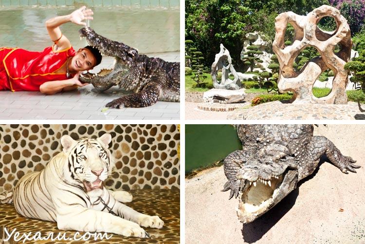 Лучшие экскурсии в Паттайе: крокодиловая ферма