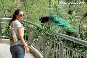 В Малайзию самостоятельно: Парк Птиц Куала-Лумпура