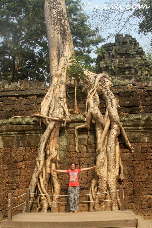 Деревья в Ангкор Вате