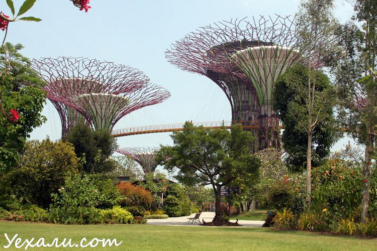 Сады у Залива в Сингапуре, фото