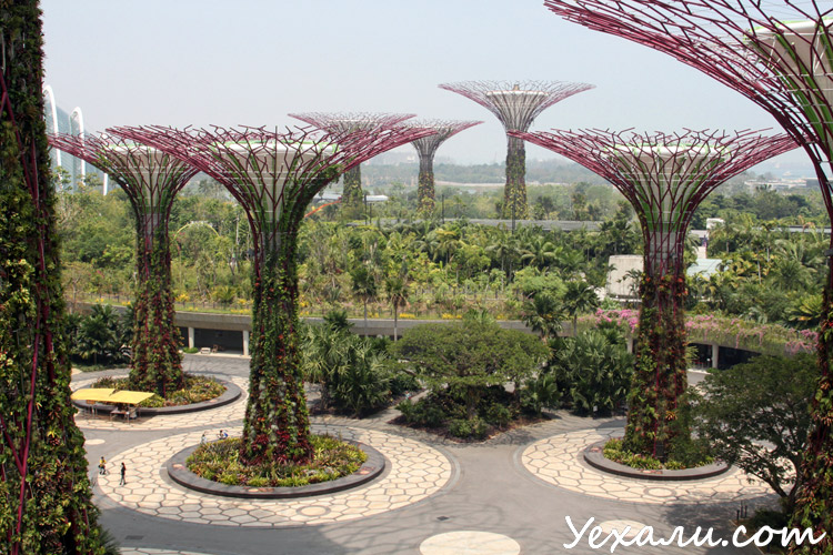Фото Ботанических садов в Сингапуре
