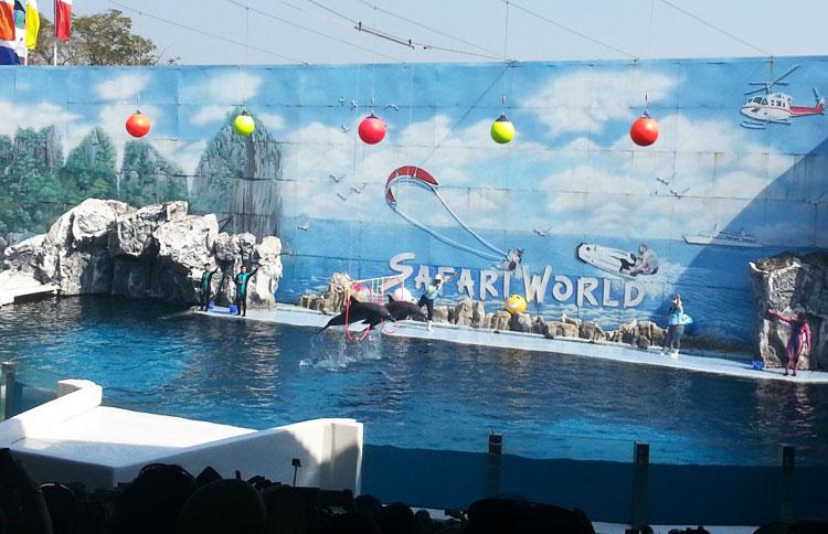 Сафари парк в Бангкоке: шоу дельфинов