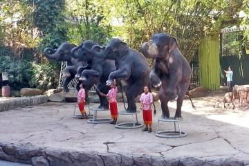 Сафари парк в Бангкоке: шоу слонов