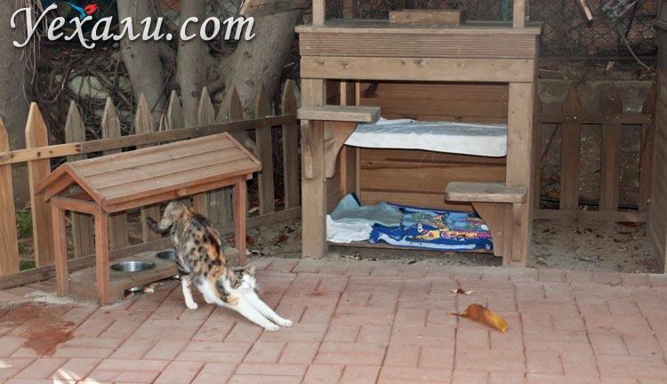 Фото Аланьи, Турция: кошачьи домики в парке