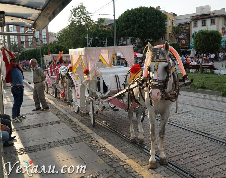 Катание на лошадях в Анталии