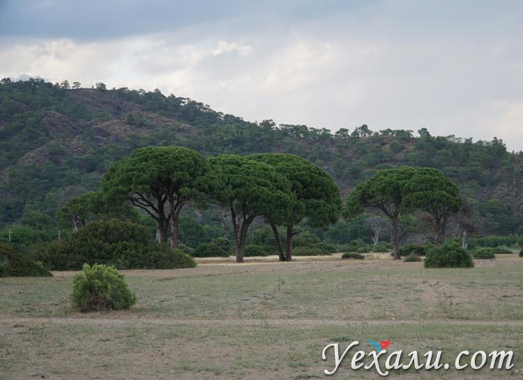 Деревья в Чиралы