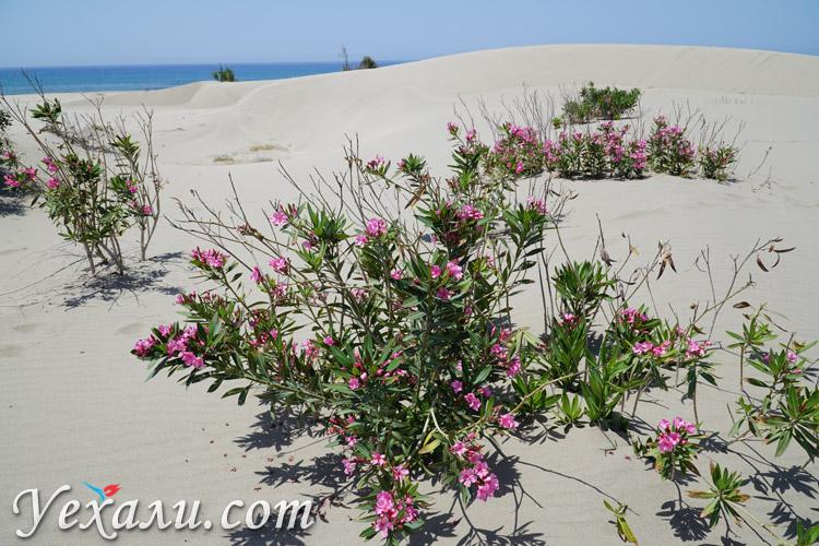 Цветы на пустынном пляже Патара