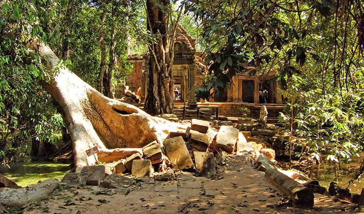 Фото храма Та Прохм в Камбодже.