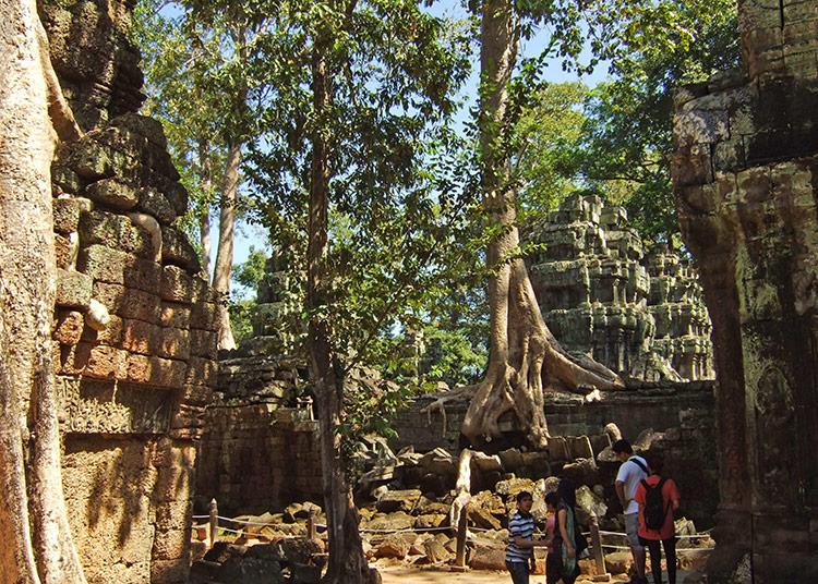 Храм Та Прохм в Камбодже (храмовый комплекс Ангкор).
