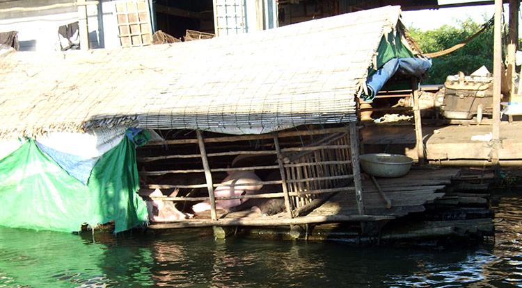 Озеро Тонлесап в Камбодже, фото свинофермы.