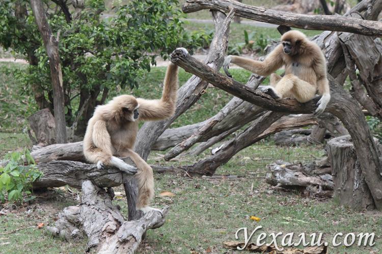 Зоопарк Као Кео в Паттайе