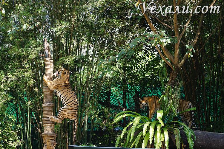Тигры в Паттайе, зоопарк Као Кео,шоу животных