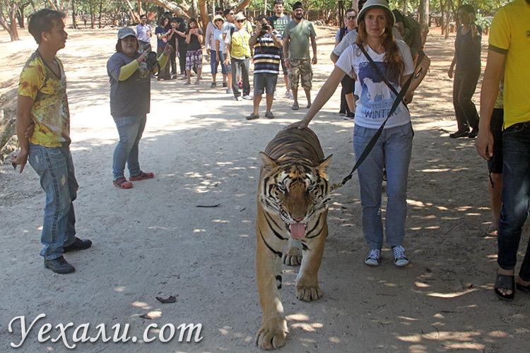 Тигровый храм в Канчанабури