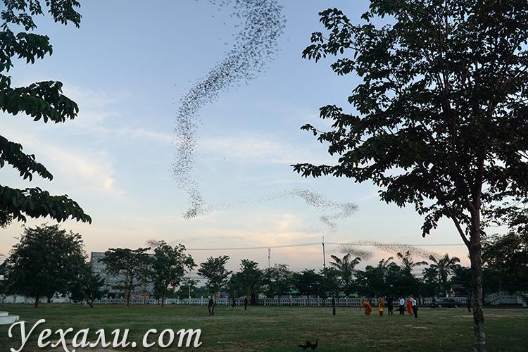 Храм летучих мышей в Таиланде