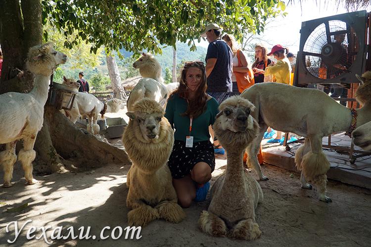 Экскурсия Земля Королей и Альпака Парк в Паттайе