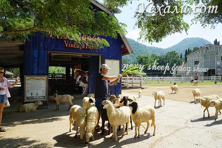 Экскурсия Земля Королей и Альпака Парк, овечья ферма