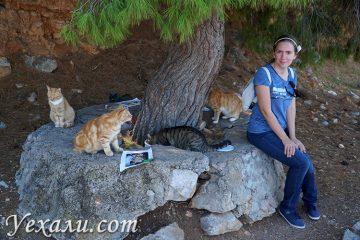 Остров Гида в Греции - самый кошачий!