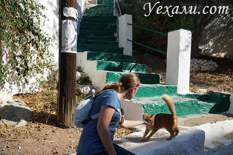 Фото острова Гидра, кошки