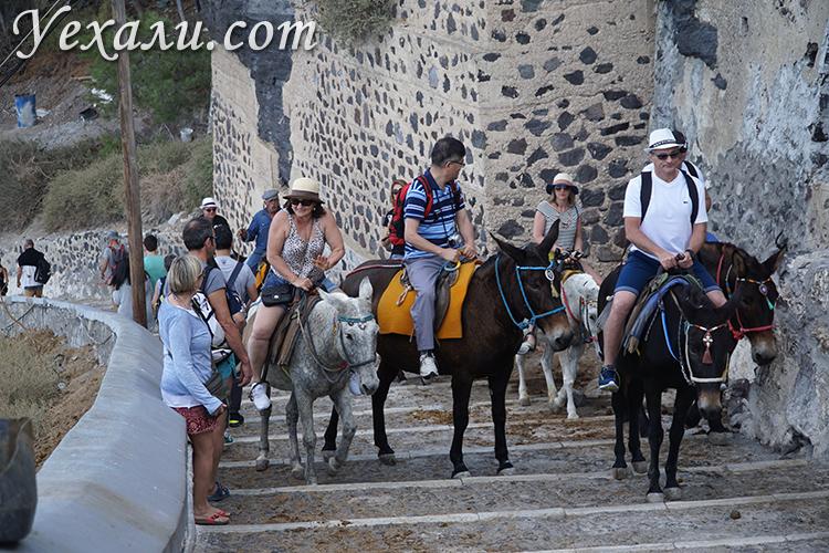 Катание на осликах на Санторини, Греция