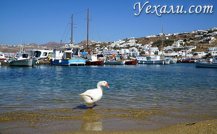 Чем заняться и что посмотреть на острове Миконос в Греции, фото.