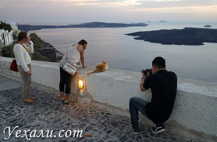 Лучшие фото острова Санторини в Греции: закат в Фире и кот.