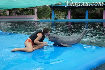 Плавание с дельфинами в Паттайе отзывы
