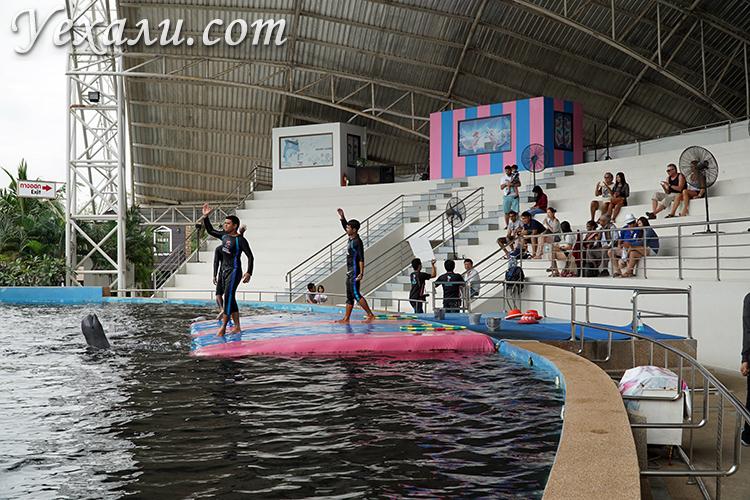 Шоу дельфинов в Паттайе