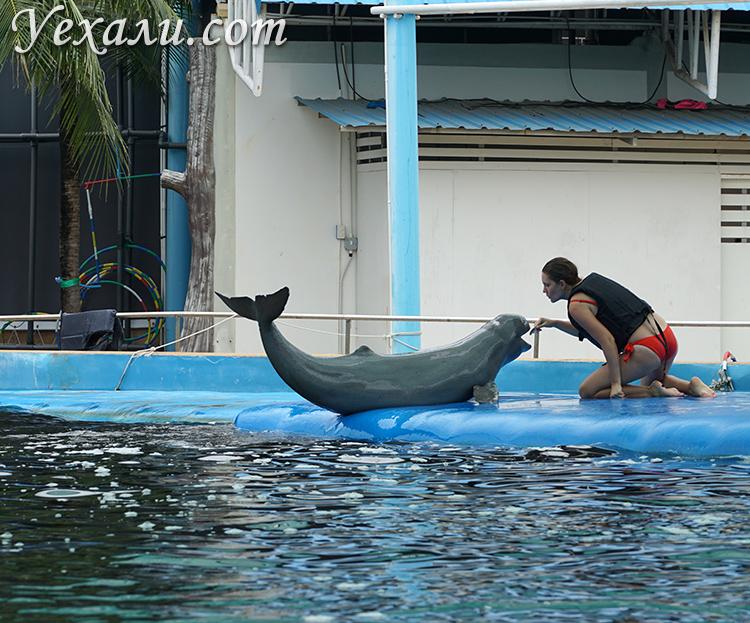 Купание с дельфинами в Паттайе много фото