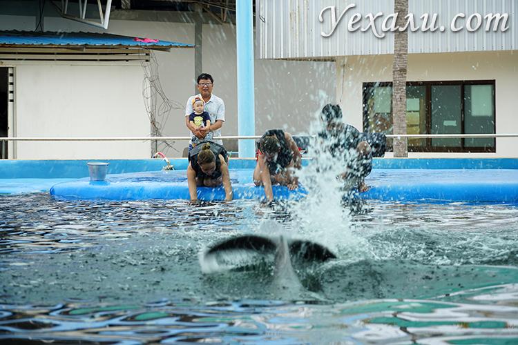 Экскурсия Купание с дельфинами Отзывы