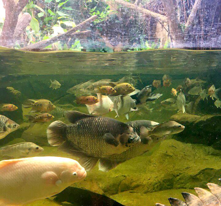 Экскурсия в зоопарк Кхао Кхео, Паттайя, Таиланд.
