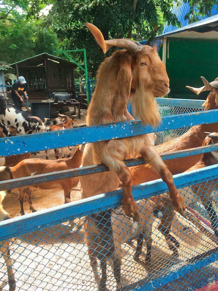 Индивидуальная экскурсия в зоопарк Кхао Кхео, Паттайя, Таиланд.
