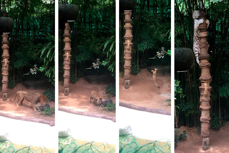 Шоу животных в зоопарке Кхао Кхео, Паттайя, Тайланд.