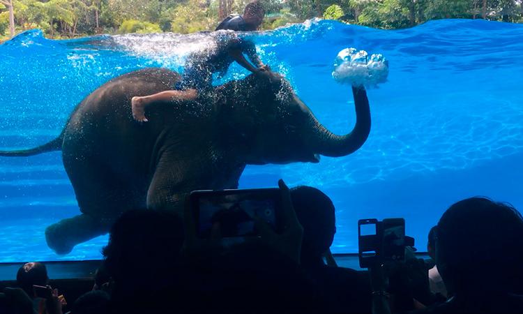 Купание слона. Зоопарк Кхао Кхео, Паттайя, Таиланд.