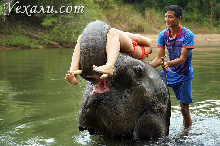 Купание на слонах на Квае