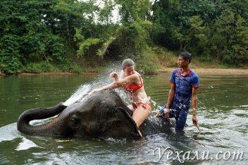 Плавание со слонами в реке на Квае