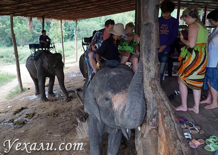 Катание на слонах на экскурсии на Квай